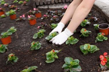 Kviečiame į gėlių sodinimo akciją Aleksote