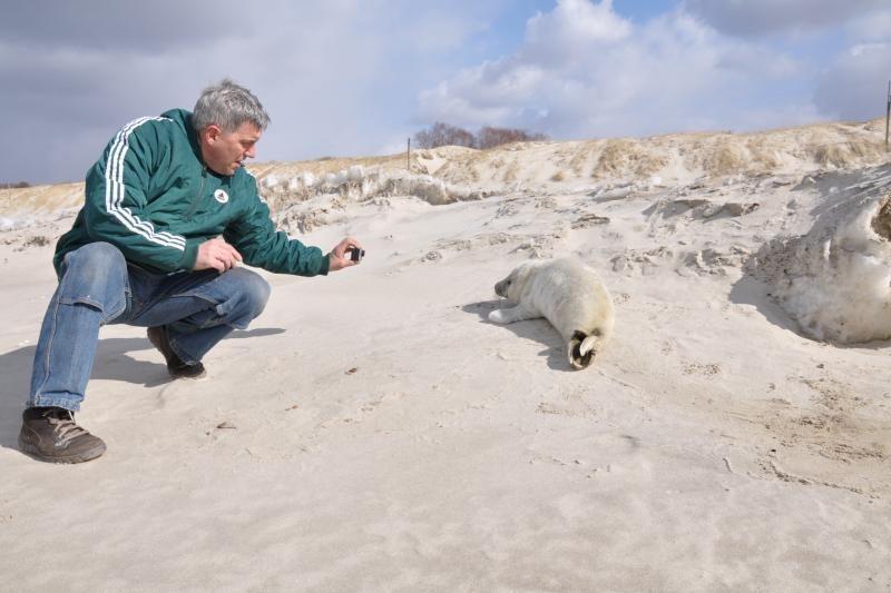 Jūrų muziejuje - kova dėl ruoniukų našlaičių gyvybės (foto)