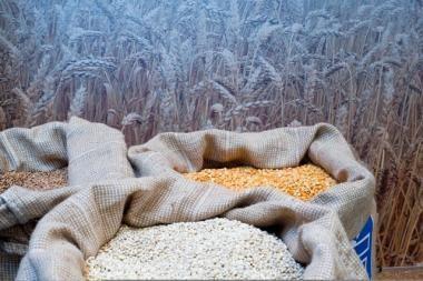 Ūkininkai parduoti grūdų neskuba