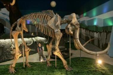 """Mokslininkai """"atgaivino"""" mamutų kraujo baltymą"""