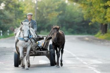 Šilutės r. žmogus pasigedo arklio su vežimu