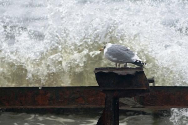 Kylantis jūros lygis grasina ir Lietuvai
