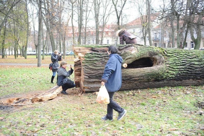 Edukacija ar apsileidimas? Miesto centre mėnesį tyso nukirstas medis