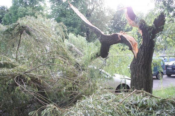 Vilniuje medis užvirto ant automobilio