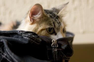 Moterį sukandžiojo katė su pavadėliu