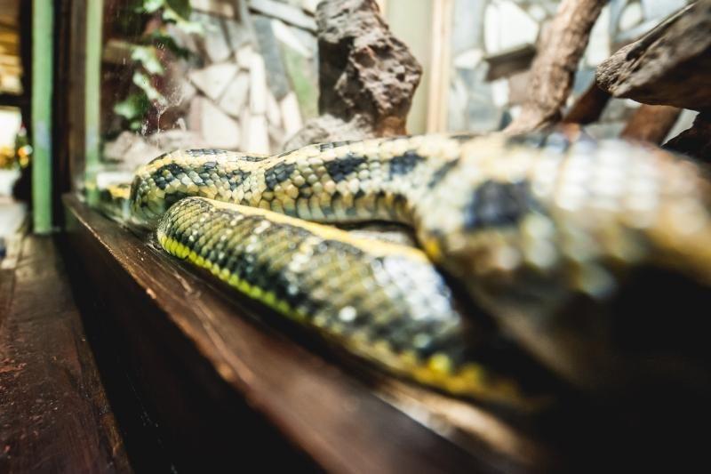Lenkijoje prekybos centro darbuotojai įkirto gyvatė
