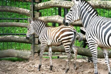 Ką daryti, kad Zoologijos sodas taptų traukos vieta?
