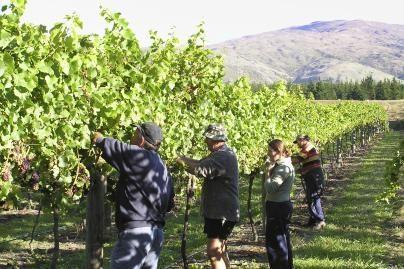 Ispanijos statybininkai Prancūzijoje rinks vynuoges
