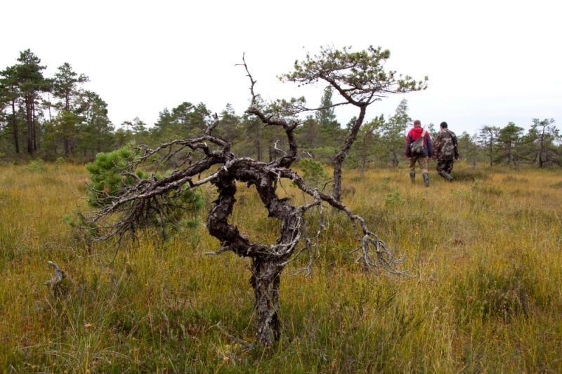 Lietuvoje kasmet atrandama dešimtys naujų rūšių