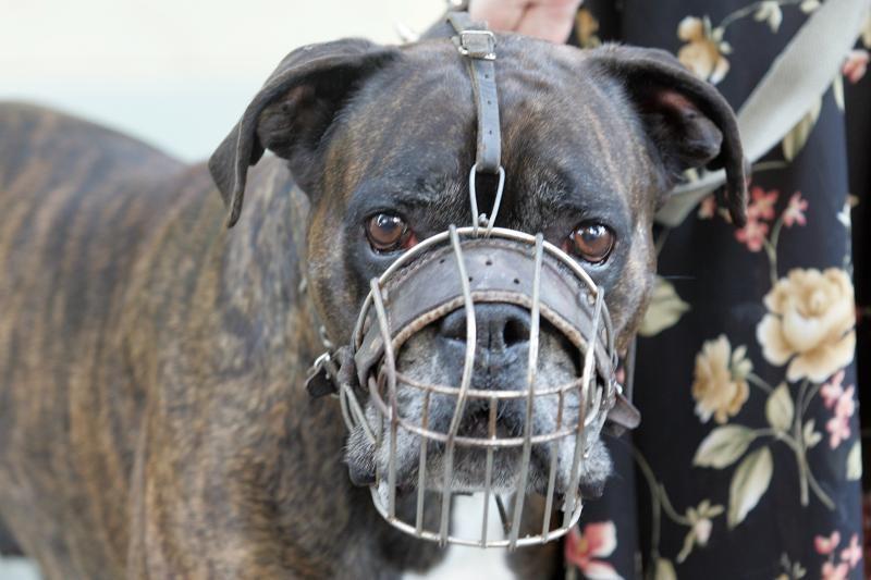 Prisidengė šunų varžybomis