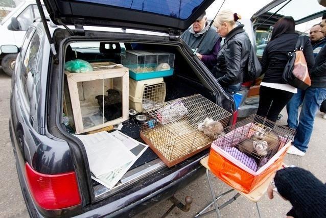 Gyvūnų teisių gynėjai stoja į kovą su turgaviečių prekeiviais
