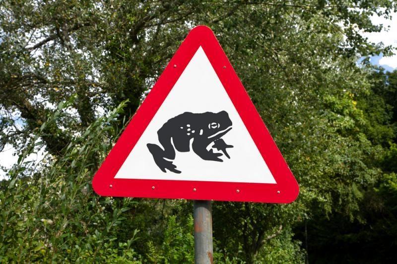 Dėmesio vairuotojai: Lietuvos keliuose jau šokuoja varlės