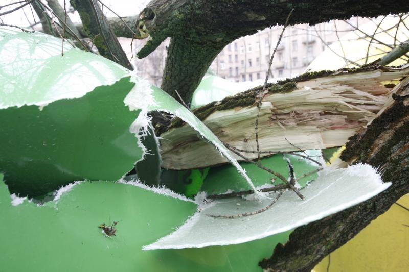 Stiprus vėjas pirmadienį Klaipėdoje vertė medžius