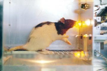 ES šalys raginamos atsisakyti bandymų su gyvūnais