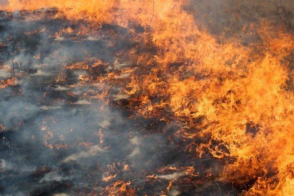 Nuo deginamos žolės jau pradėjo degti ir pastatai