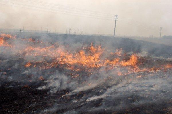 Kėdainių gaisrininkai kovoja su degančia žole
