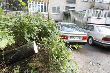 Vėjas Klaipėdoje vartė medžius