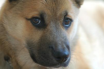 Indijoje teisiamųjų suole atsidūrė šuo