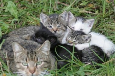 Savivaldybė kaltinama uždraudus maitinti benamius gyvūnus
