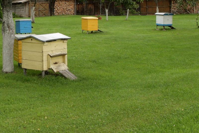 Vagių grobis Gargžduose - aviliai su bitėmis