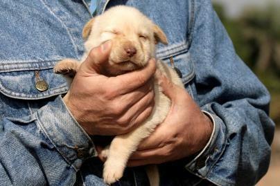 Savaitgaliais gyvūnų viešbučiai perpildyti