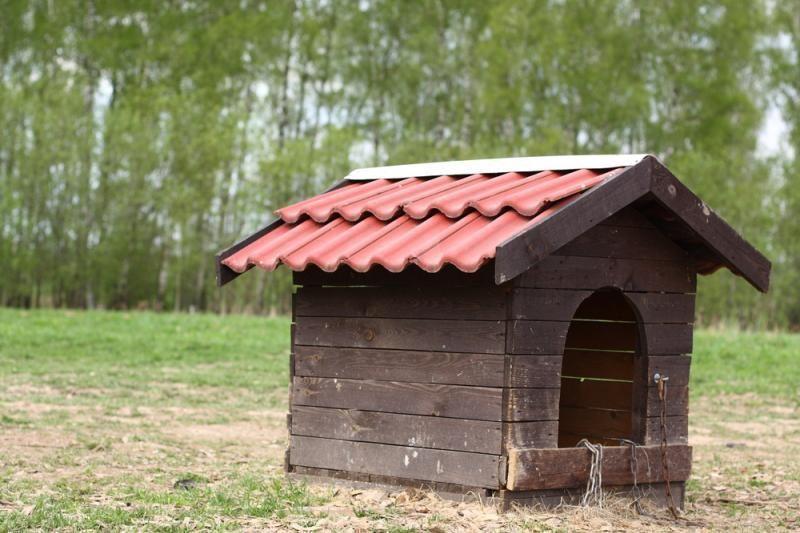 Dėl nugaišusio šuns Klaipėdos rajone pradėtas tyrimas