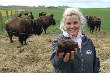 Žemaitijos vidury – bizonų prerijos