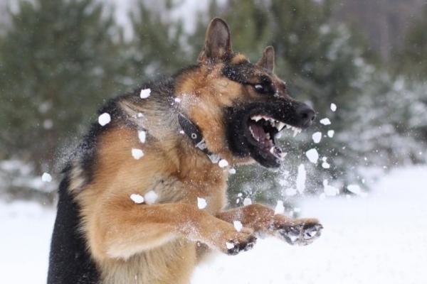 Policininko nušautas šuo nebuvo pasiutęs