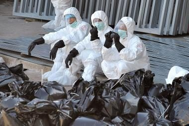 Vokietijoje – paukščių gripas, Vengrijoje – kiaulių maras