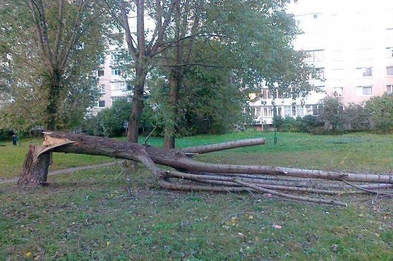 Nulūžęs medis ir atsakingų tarnybų vangumas siutina gyventojus