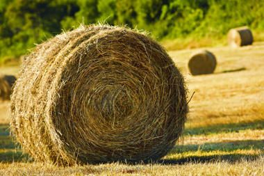 Siekiantiems ES lėšomis modernizuoti ūkius – pasikeitimai