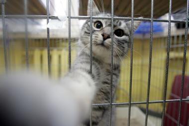 Padėkite mergaitei ir jos kačiukui