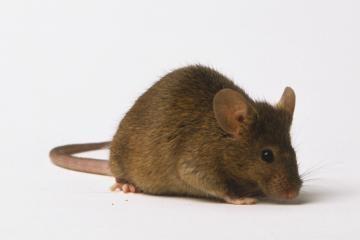 Už pelę aluje – kalėjimas ir 30 tūkst. eurų bauda