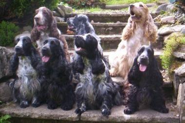 Prancūzų pora augino 64 šunis