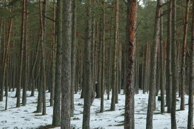 Kiškėnų miške – negyvas vyras
