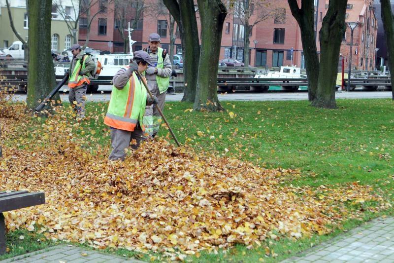 Medžių lapus uostamiesčio parkuose paliks supūti