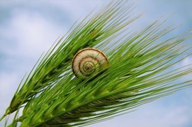 Žemės ūkio produktų supirkimo kainos per metus išaugo 23,2 proc.