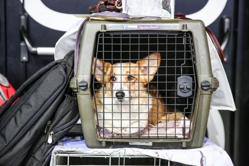 Atnaujintos ir suvienodintos gyvūnų laikymo taisyklės