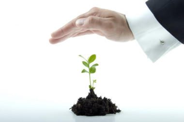 Finansų analitikai: šiemet dividendų derlius turėtų būti gausesnis