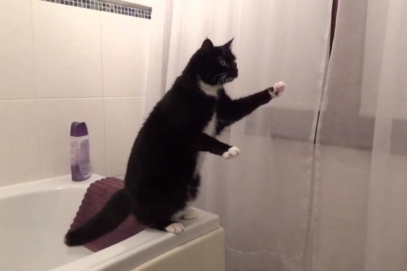 Sumani katė nufilmuota besidominti savo atvaizdu veidrodyje