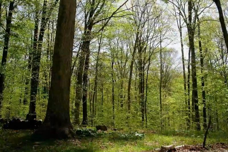 15 mėnesių miške (taip keičiasi metų laikai)