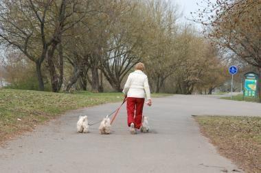 Orai Kaune: šilumos šią savaitę nelaukime