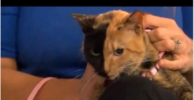 Dviveidė katė, vardu Venera: priešingose kūno pusėse - skirtingi DNR?