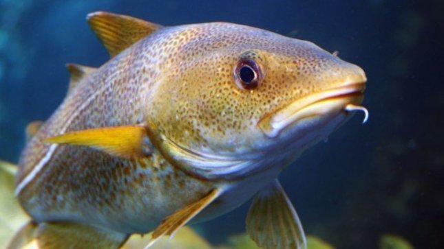 Lietuvoje veisiama daugiau rūšių    žuvų
