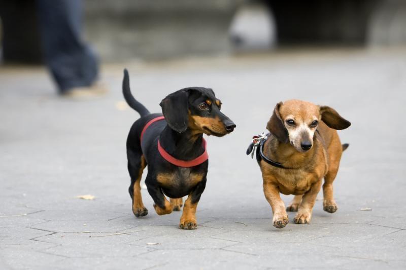 Parkuose mėtomas maistas šunims su vinimis?