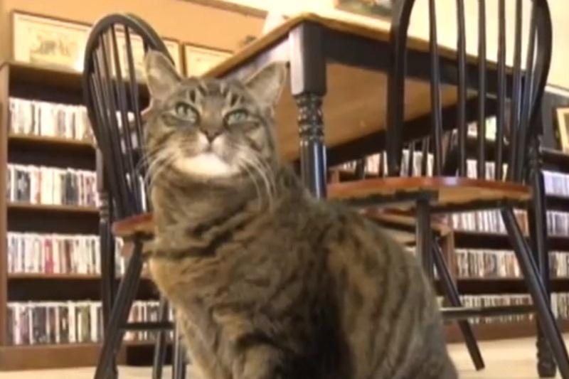 Katė Penny – viešosios bibliotekos šeimininkė