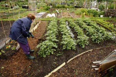 Nuo lapkričio žemdirbiams bus pradėta mokėti dar 221 mln. litų nacionalinių išmokų
