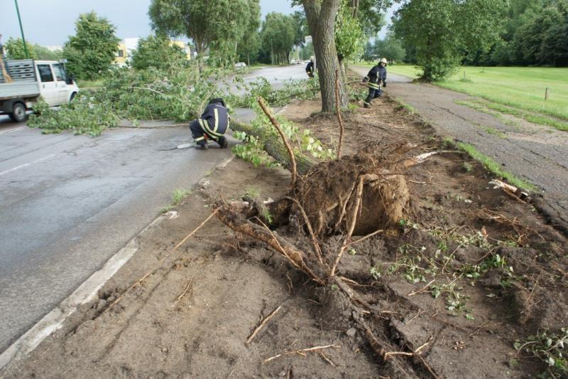 Minijos gatvėje vėjas išvertė medį