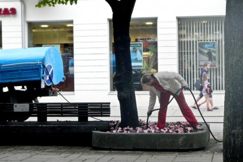 Laisvės alėjoje gėlės laistomos ir po lietaus