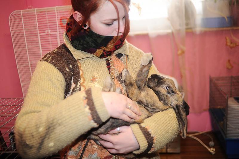 Gyvūnų prieglaudoje meilės ilgisi beširdžių žmonių aukos